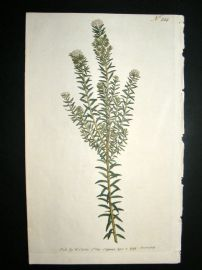 Curtis 1793 Hand Col Botanical Print. Heath Leaved Phylica 224